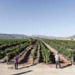 Vinícolas Chilenas – Conheça de perto