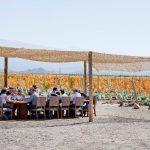Vindima em Mendoza: Chegou a época de pisar nas uvas