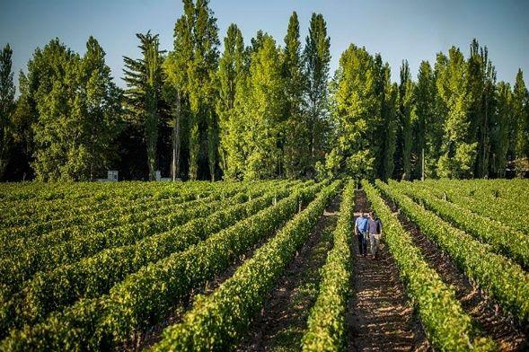 o vinhedo histórico Terrazas de los Andes e também um dos terroirs de alta altitude mais valiosos da Argentina